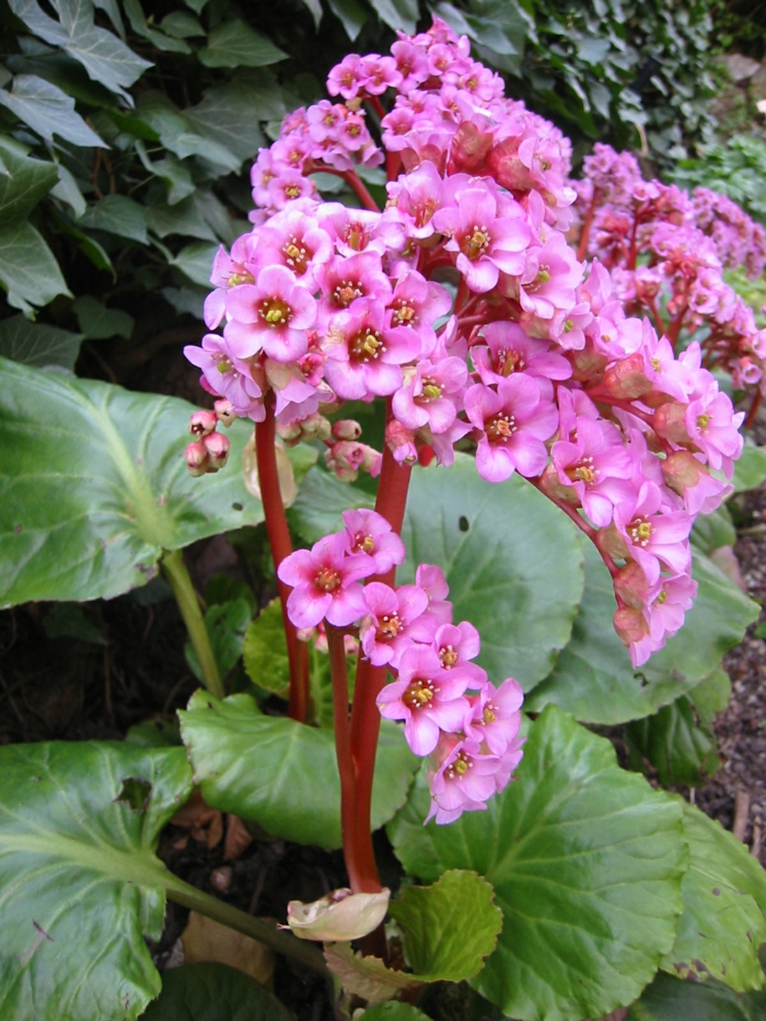 Durch schattenpflanzen den garten versch nern - Schattenpflanzen garten ...