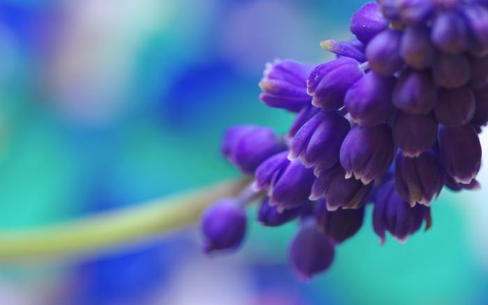 Die Farbe Lila traube