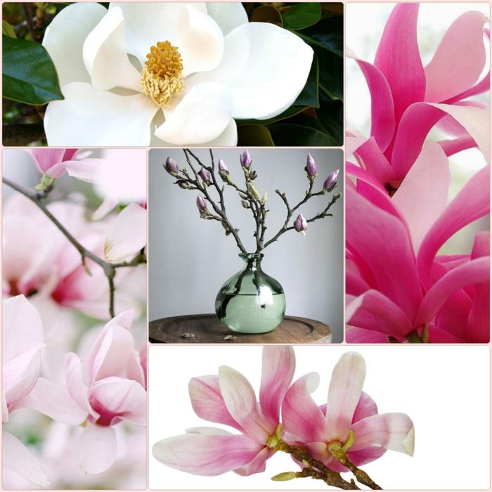 Magnolien dekoration garten ideen gartenpflanzen baum