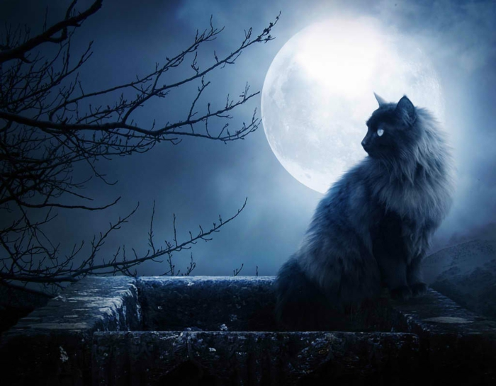 Mondphasen verstehen magie