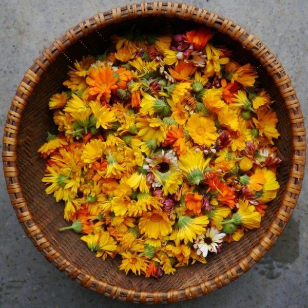 Ungeziefer bekaempfen gartenpflanzen gegen muecken ringelblume gartenpflanzen