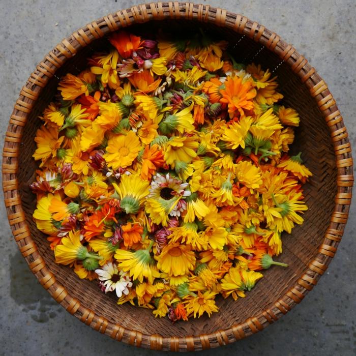Ringelblumen licht und freude
