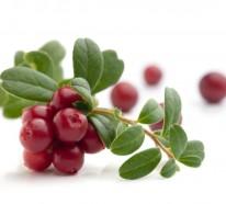 Was sind Cranberries? Lernen Sie die gesunde Frucht kennen!