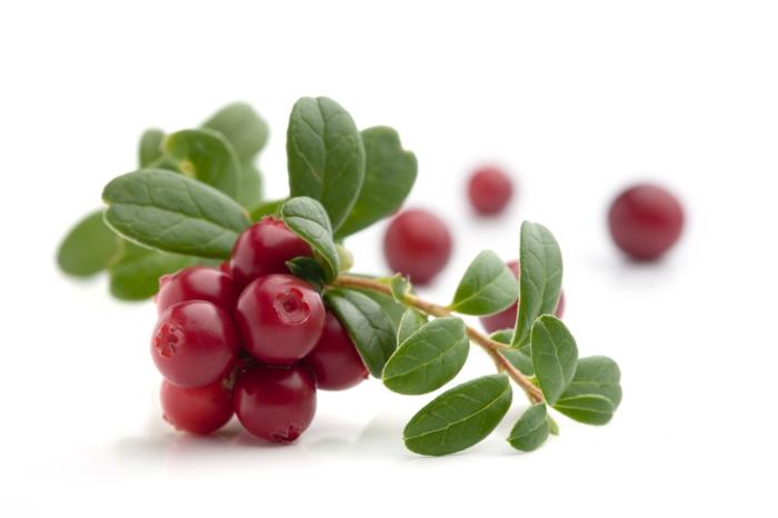 Was sind Cranberries frucht am busch