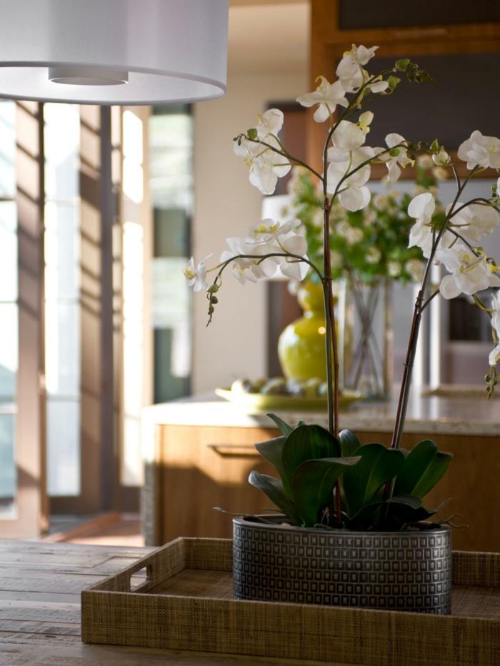 Blumendeko Ideen Orchidee Zimmerpflanzen