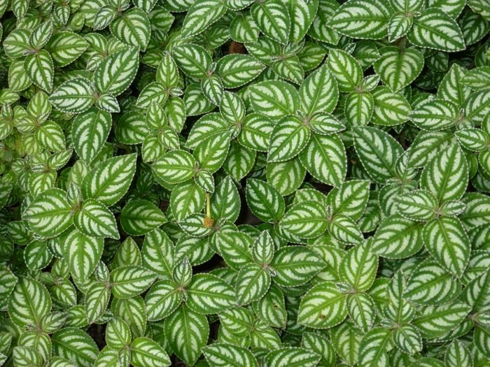 garten verschönern bodengestaltung pflanzen schöne blätter