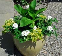 Pflegeleichte Gärten profitieren aus dem Zauber wunderschöner Containerpflanzen