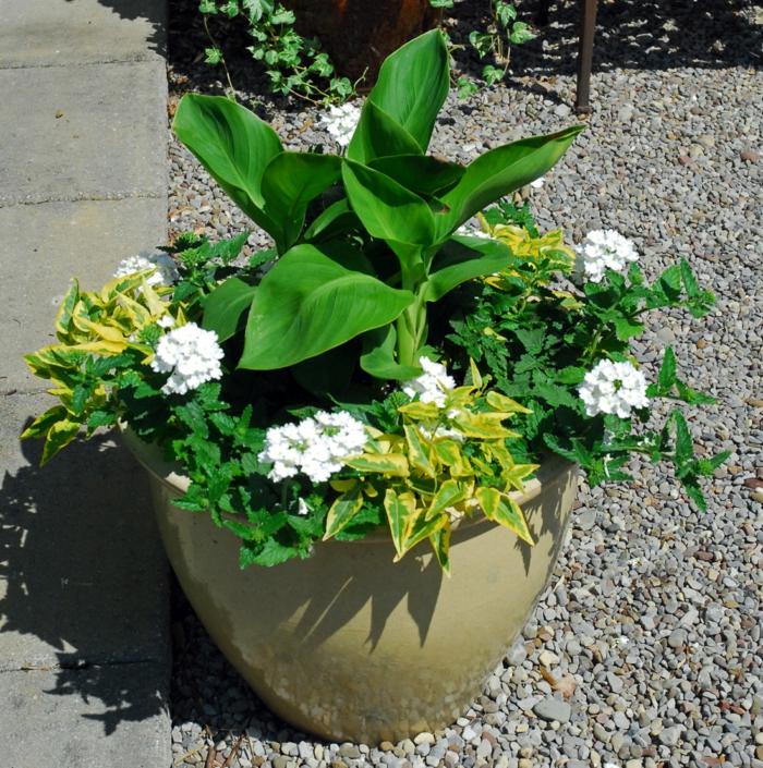 gartenpflanzen pflegeleichter garten blumenohr