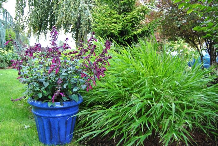 gartenpflanzen salbei blumentopf schöne gartenideen