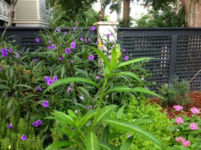 gartenpflanzen tropische seidenpflanze garten verschönern