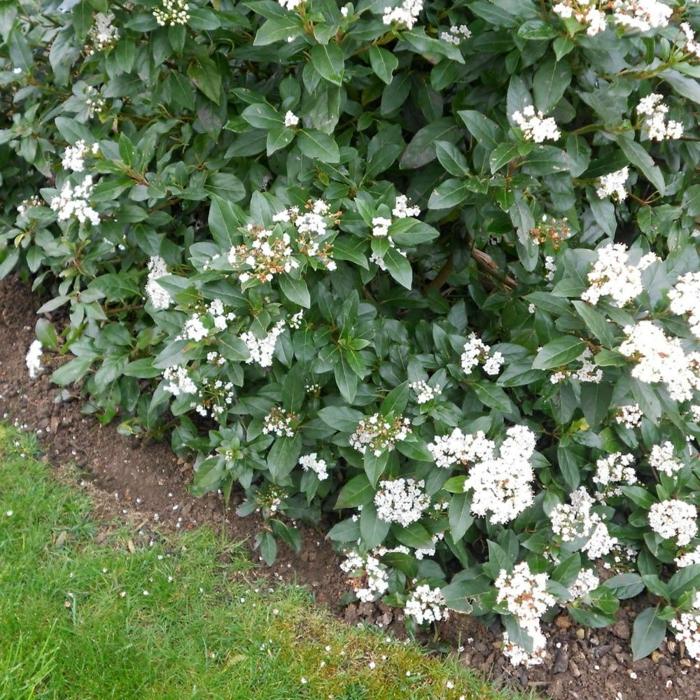 Heckenpflanzen auswählen und eine schöne Hecke gestalten