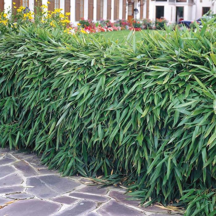 Garten Gestalten Sichtschutz : heckenpflanzen ausw hlen und eine sch ne hecke gestalten ~ Sanjose-hotels-ca.com Haus und Dekorationen
