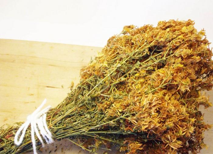 johanniskraut heilpflanze getrocken lifestyle gesundheit