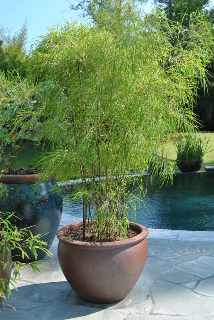 pflegeleichte gärten bambus blumentopf schöne gartenideen