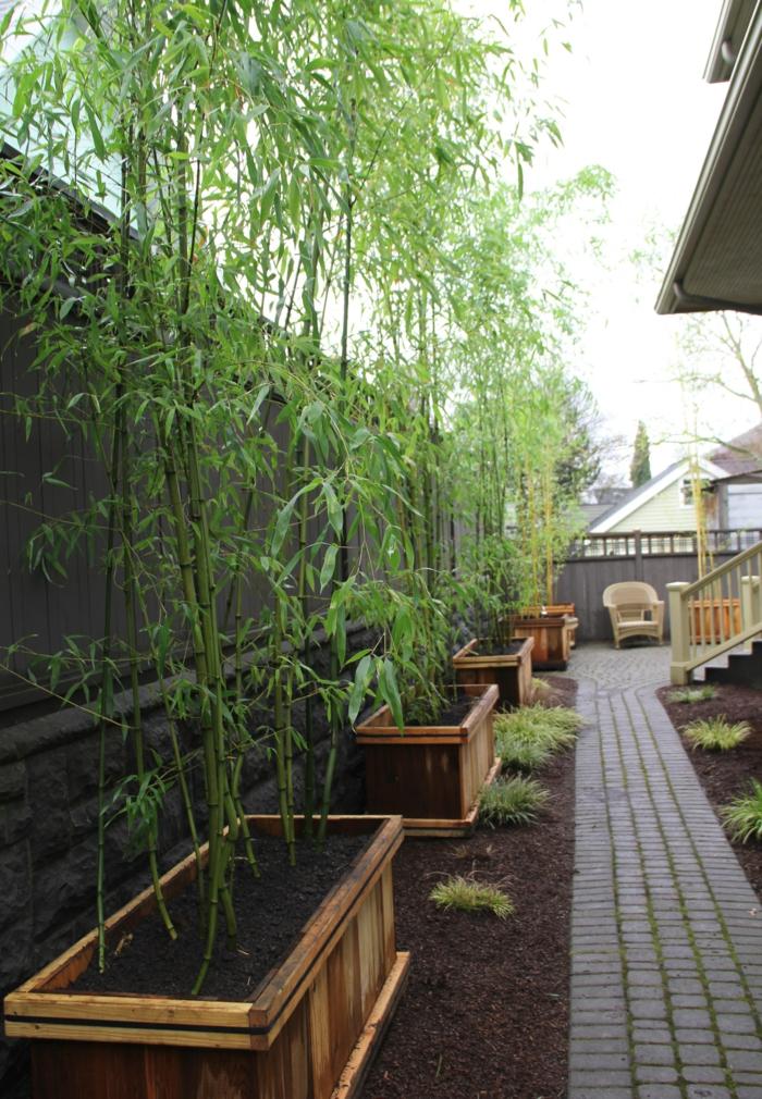 pflegeleichte gärten bambus züchten gartenpflanzen