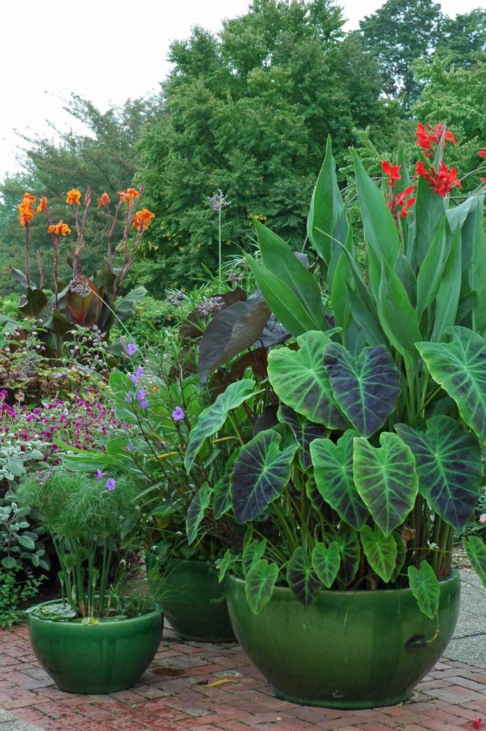pflegeleichte gärten elefantenohr schöne gartenideen