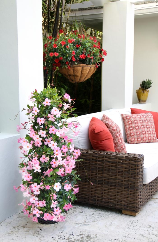 pflegeleichte gärten mandevilla pflanze gartensofa rattan
