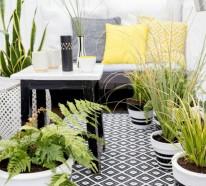 Terrassenbepflanzung Tipps: So gestalten Sie eine grüne Wohlfühloase im Freien