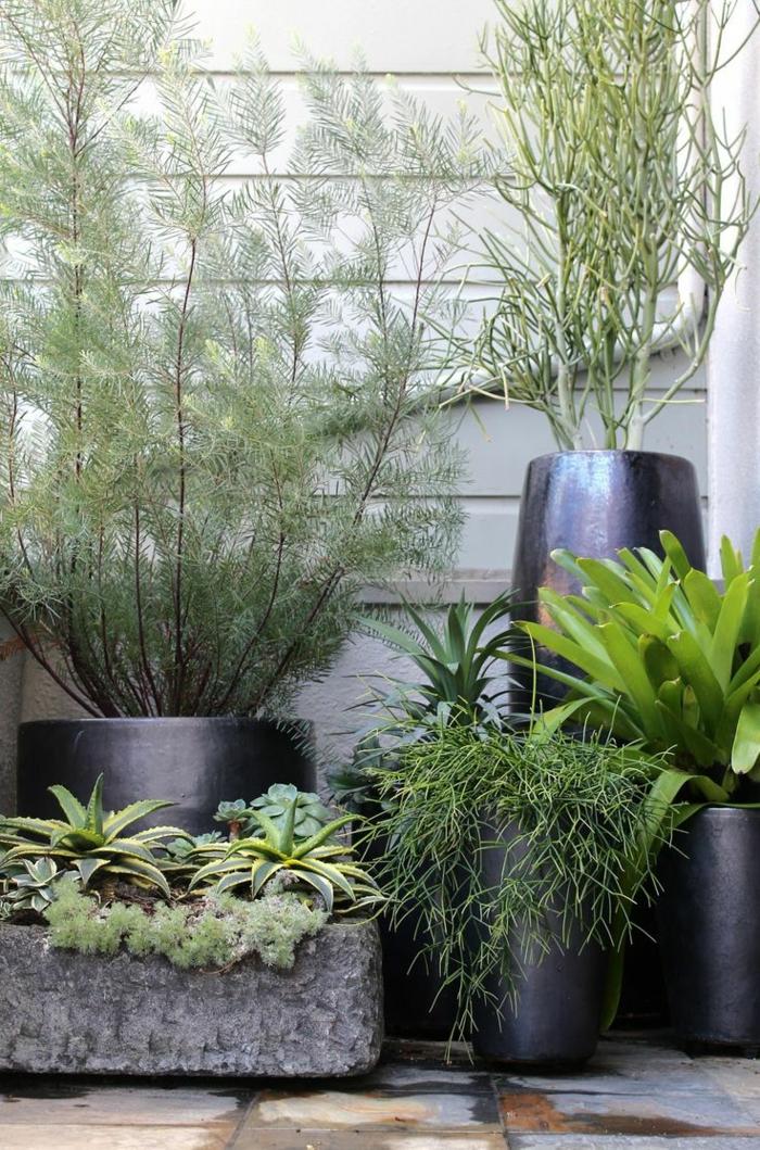 terrassenbepflanzung möbel und balkonpflanzen pflanzenarten