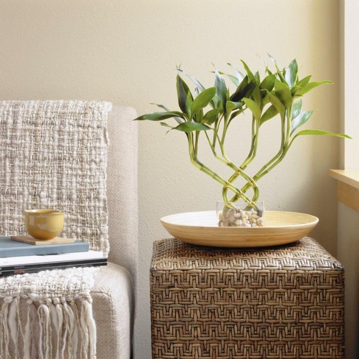 zimmerbambus indoor zimmerpflanze pflegetipps
