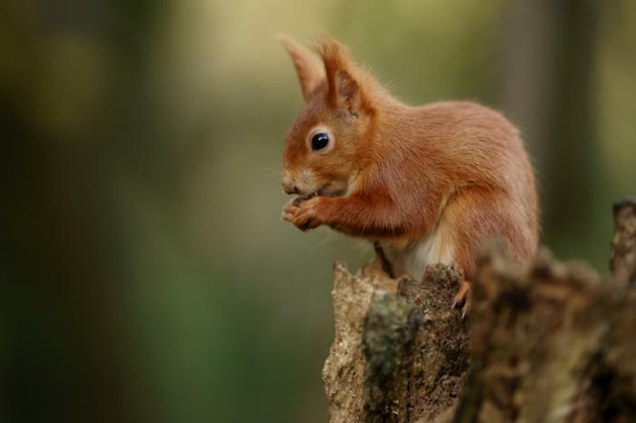 Haselnüsse gesund eichhörnchen
