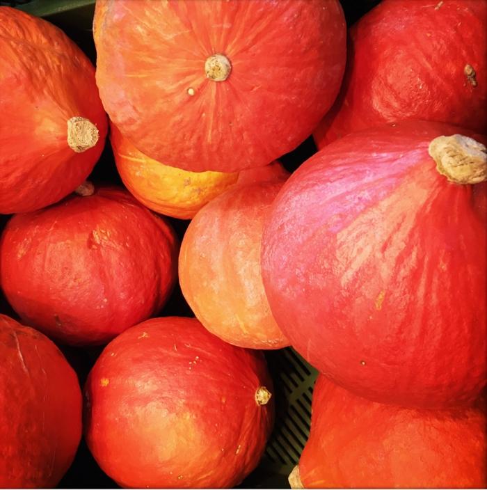 Hokkaido Kürbis früchte