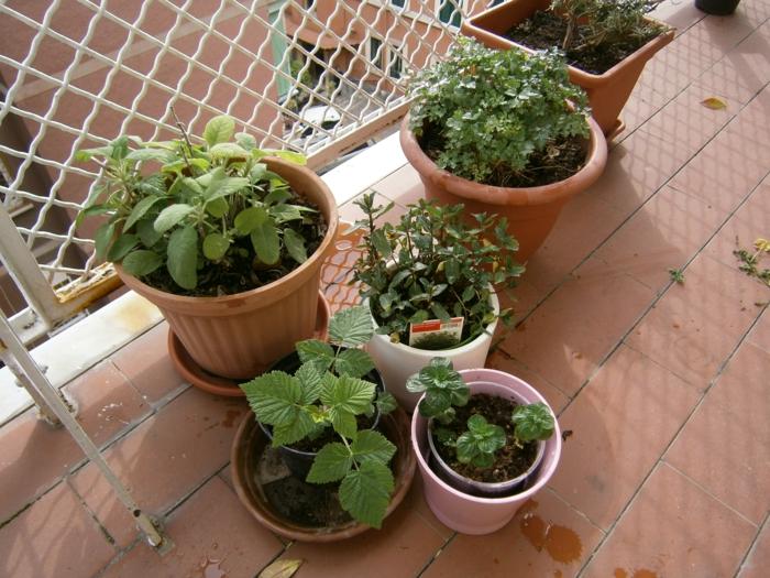 balkongestaltung ideen garten kräuter züchten
