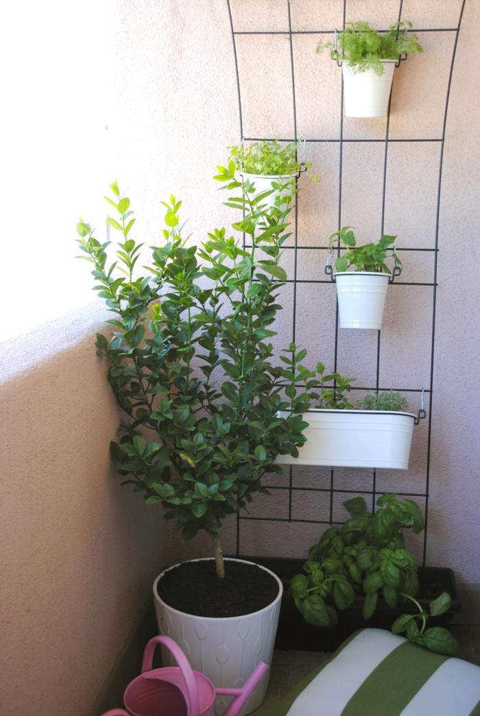 bio-garten balkon kleinen balkon gestalten kräuter züchten