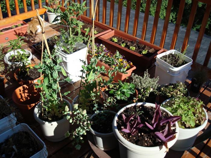 bio garten gestalten terrasse tomaten kräuter