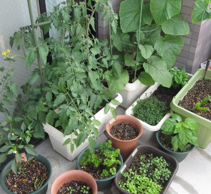 bio garten terrasse gestalten gewürze züchten