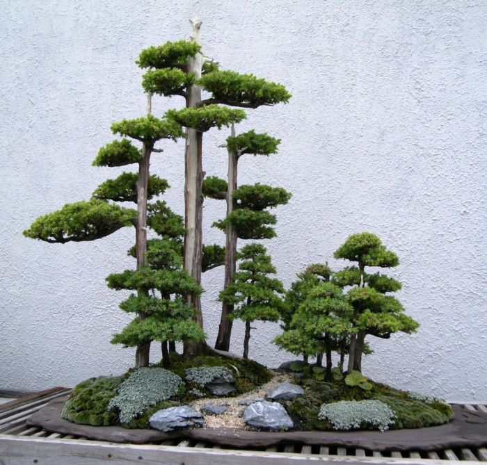 bonsai baum pflege bonsai diy ideen