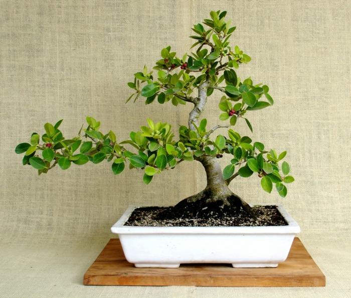 deko mit bonsai pflanzen moosb lle zum aufh ngen selber. Black Bedroom Furniture Sets. Home Design Ideas
