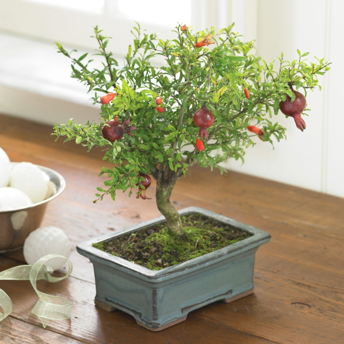 bonsai baum pflege früchte passender container