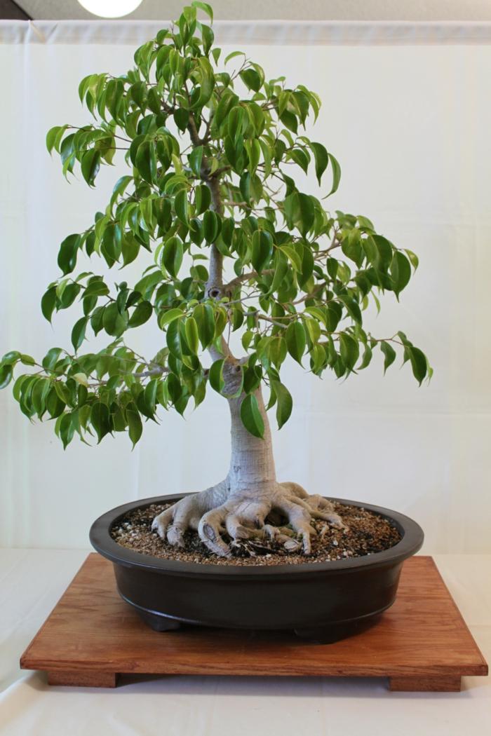 bonsai baum pflege schöne dekoideen