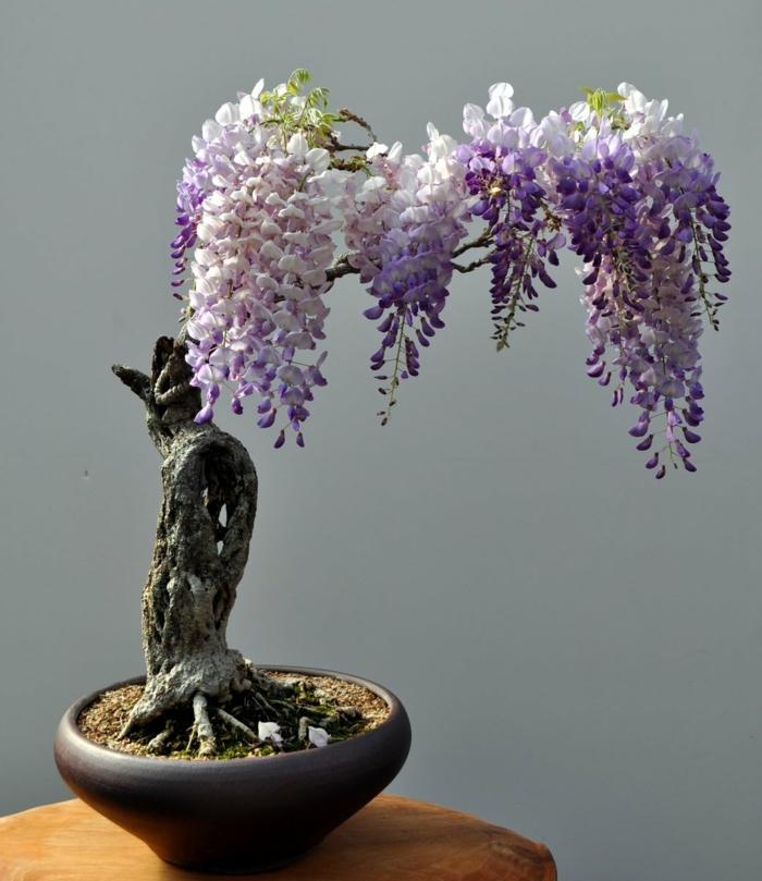 bonsai baum schöne blüten pflanzen