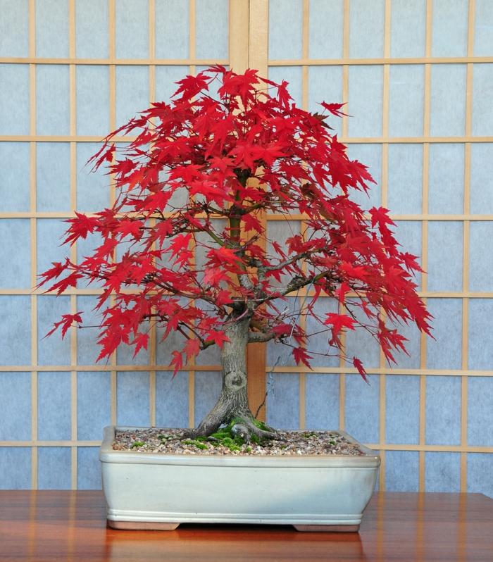 bonsai baum pflege zimmerpflanzen deko ideen