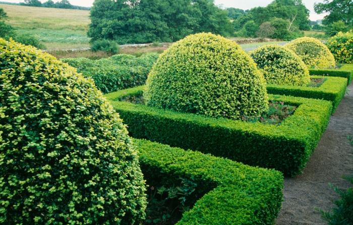 buchsbaum schneiden geometrische figuren garten und landschaftsbau