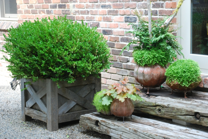 Buchsbaum eine gartenpflanze mit viel gestaltungspotenzial for Topfpflanzen dekorieren