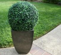 Buchsbaum: eine Gartenpflanze mit viel Gestaltungspotenzial