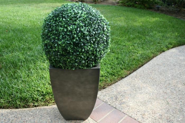 buchsbaum eine gartenpflanze mit viel gestaltungspotenzial. Black Bedroom Furniture Sets. Home Design Ideas