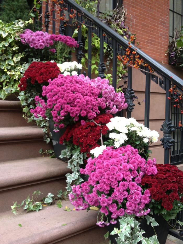 Chrysantheme im herbst wissenswertes und n tzliche tipps for Garten im herbst gestalten