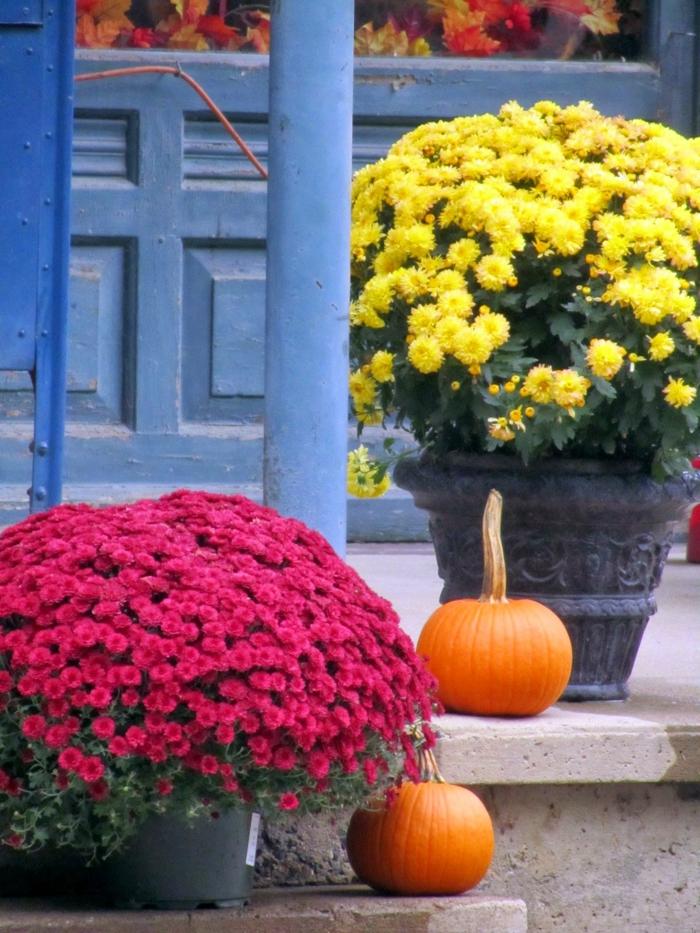 chrysantheme garten ideen gartenpflanzen herbstdeko kürbisse