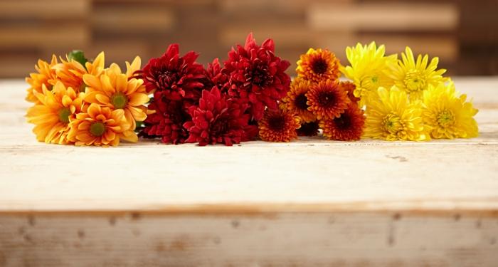 chrysanthemen herbstblumen garten verschönern ideen