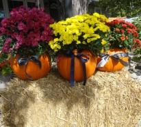 Chrysantheme im Herbst – Wissenswertes und nützliche Tipps