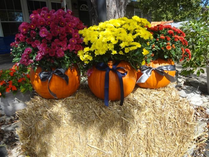 chrysanthemen garten verschönern herbstblumen halloween deko ideen