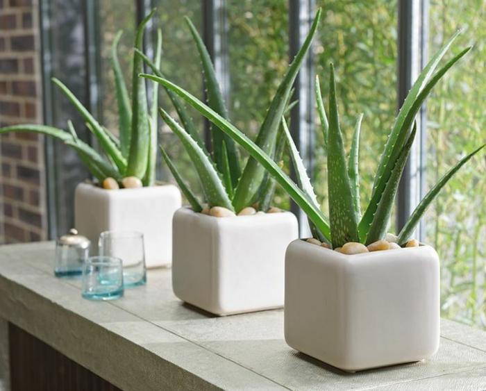 was hilft gegen sonnenbrand nutzen sie die heilende wirkung der aloe vera pflanze. Black Bedroom Furniture Sets. Home Design Ideas