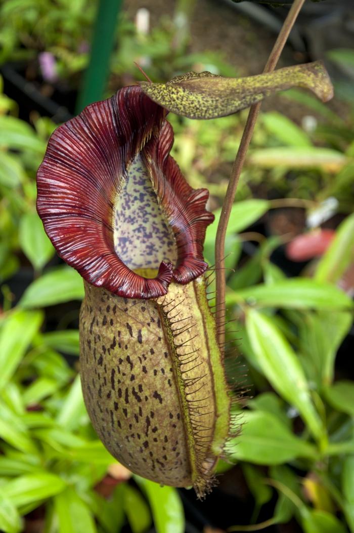 Pflanzen kennenlernen