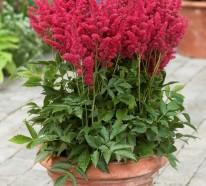 So heben Sie Ihre Topfpflanzen im Winter auf