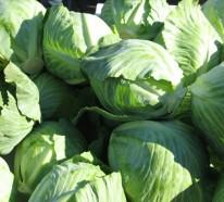 Grünes Gemüse – Warum ist Weißkohl gesund?