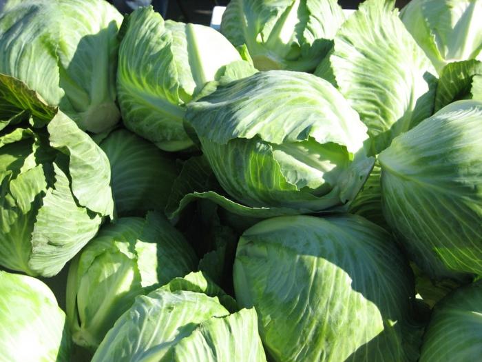 grünes gemüse gesund essen tipps weißkohl gemüsesorte